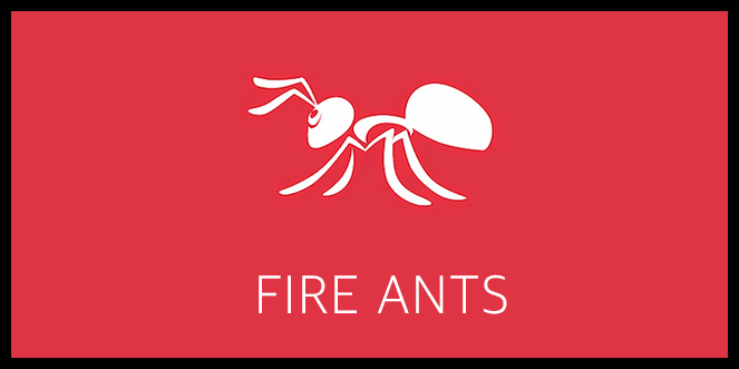 Fire Ants Course - Applicator Training