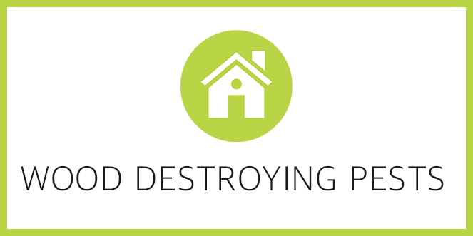 Wood Destroying Pests Training CEU